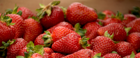 Breeding A Better Strawberry