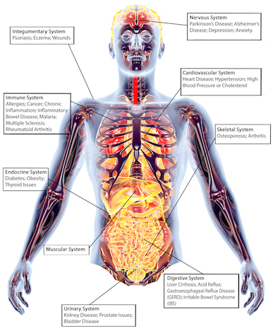 human health and disease Infection, disease & health provides a platform for the publication and dissemination of original knowledge at the  and vaccination related to disease in human health.